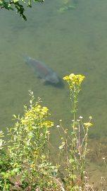 fishing lake france