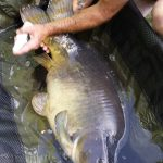 carp fishing Adilly 79